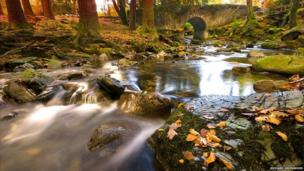 Weather photo attached of Tollymore in autumn.