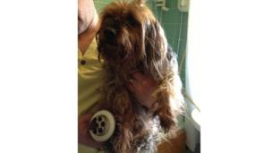 Dog with paw stuck in plughole