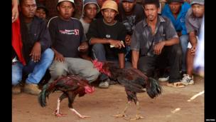 Malagasy men watch a cockerel fight in Ambohimangakely, Madagascar - Sunday 27 October 2013