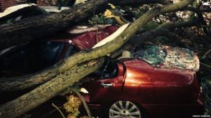 Collapsed tree on car. Photo Tanmay Karkare