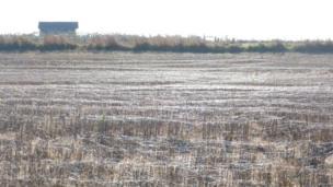 Spider webs in a field