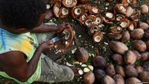 A man opens coconuts in Honiara, the capital city of Solomon Islands.