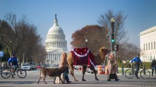 Members of Faith and Action lead a donkey and a camel as they participate in a 'Live Nativity' procession on Capitol Hill in Washington, DC, December 3, 2013.