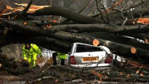 A car crushed by a tree