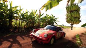 Roger Samuelsson passes through the banana fields