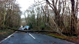 Fallen tree in Ottershaw