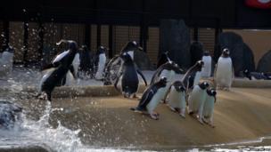 Penguins. Photo: Christine Day