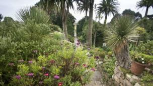 Abbey Gardens, Tresco, January 2014
