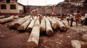Men in shorts working with the logs