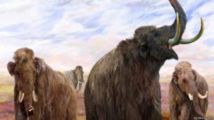 Mammoths of the Ice Age explores the mysteries of the ice age and reveals what life was like for the iconic mammals of this era; the mammoth and the mastodon