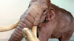 Visitors will be able to see and touch the biggest and smallest mammoths that ever lived. Going on display is a full-scale replica of an impressive Columbian mammoth, a cousin of the woolly mammoth, which would have stood around 4 metres tall