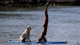 Dog and woman doing yoga on a paddleboard