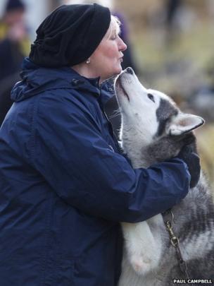 Siberian Husky Club race at Aviemore