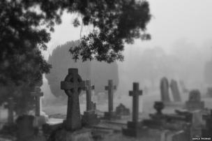 Mist-covered cemetery