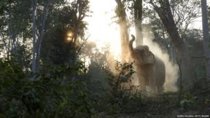 An elephant in Maing Hint Sal elephant logging camp, Burma