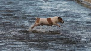 A dog makes his was home through a flooded street in Limerick city