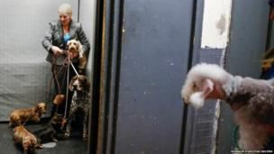 A dog handler waits with her dogs inside a lift at the Hotel Pennsylvania in New York