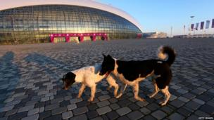 Stray dogs walk in front of the Bolshoy Ice Dome