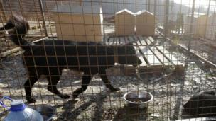 Dogs gather at a private dog shelter in Baranovka