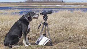 Buzz bird spotting