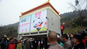 Pandas in a box