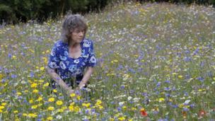 Wildflower meadow in Tweedbank in the Borders