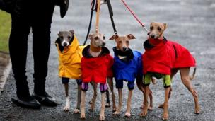 Dogs in dog coats