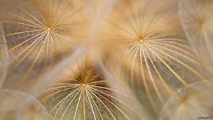 Seedheads by Phil McLean