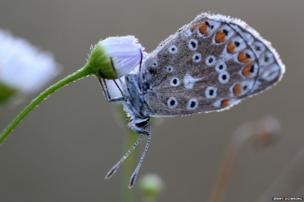 Dew-drenched butterfly
