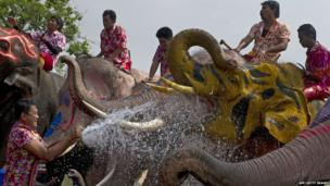 Men and elephants in water fight