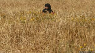 A Palestinian woman harvests barley on a farm near the border of the southern Gaza Strip with Israel - 28 April 2014.