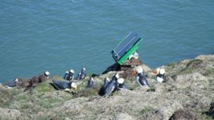 Dummy Puffins with solar panel device