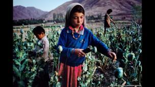 Children work in an opium filed, Badakhshan, 1992.