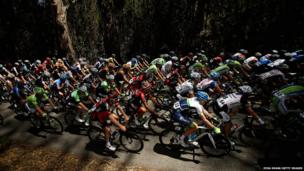 The peloton rides through a group of eucalyptus trees