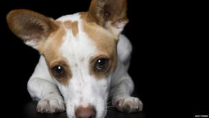 Emma the pup