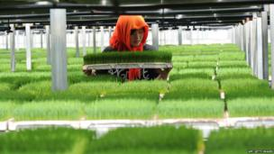 A woman works in a greenhouse in Lianyungang, in China's eastern Jiangsu province, on 29 May 2014