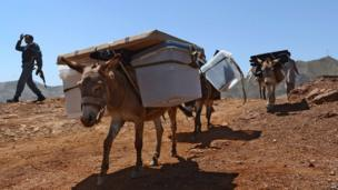A donkey carries ballot boxes and election material in Afghanistan, 13 June 2014