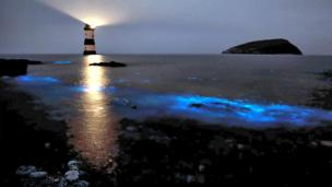 The bioluminescent activity of plankton