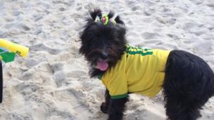 Dog dressed in brazil
