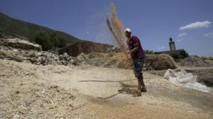 A man threshes wheat at his farm in Morocco on 14 June 2014