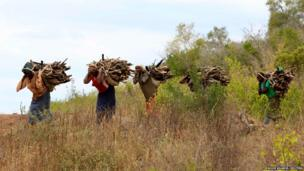 Women carry firewood in the Kibwezi National Forest Reserve in Kenya
