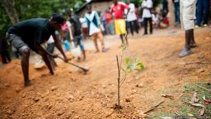 Finda Marie's grave is marked by a solitary sapling
