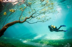 Diver in Magic Kingdom by Marc Henauer