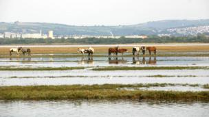 Ponies at Penclawdd