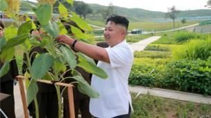 North Korean leader Kim Jong-un inspects some plants