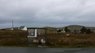 Sheep at a bus stop