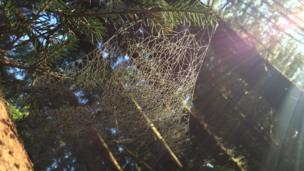 Spider's web Glen Loy