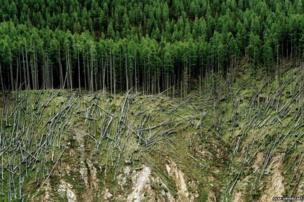 Rolled lumber, Ofenpass, Switzerland