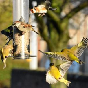 birds at feeder