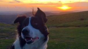 Kathryn Hopkins took this picture of her dog Oliver whilst walking on Twmbarlwm mountain in Risca., Caerphilly county.